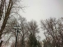 Winter landscape. City Park. Snow and snowfall.  Royalty Free Stock Photo
