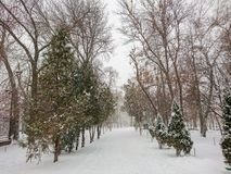 Winter landscape. City Park. Snow and snowfall.  Stock Images
