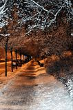 Winter landscape in the city, winter in the night snowy park. Gdynia, Poland Royalty Free Stock Images