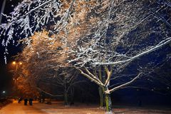 Winter landscape in the city, winter in the night snowy park. Gdynia, Poland Royalty Free Stock Photos