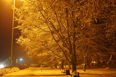 Winter landscape in the city, winter in the night snowy park. Gdynia, Poland Royalty Free Stock Photo