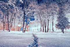 Winter landscape - city winter park covered with frosted trees and snowflakes in the night Royalty Free Stock Image