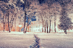 Winter landscape - city winter park with frosted trees under falling snow in the night Royalty Free Stock Image
