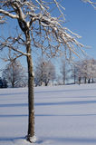 Winter Landscape. Close up tree in front of a winter landscape Stock Photography