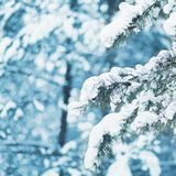 Winter landscape closeup snow-covered tree branch Royalty Free Stock Images