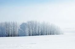 Winter landscape in cold day with frozen trees Stock Image