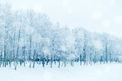 Winter landscape in cold tones - row of winter frosty trees in the park royalty free stock photos