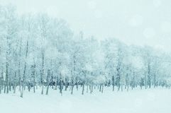 Winter landscape in cold tones - winter frosty trees in the winter park in cloudy snowy day royalty free stock photo
