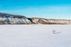 Winter landscape. Composition of nature. Royalty Free Stock Photography