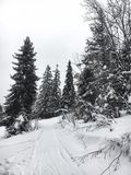 Winter landscape in the coniferous forest. Abandoned old wooden house, the Forester`s hut on a snowy meadow in the Carpathian mou. Ntains in Ukraine in the foggy Royalty Free Stock Photography