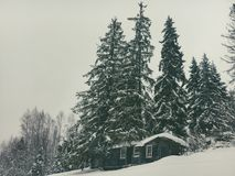 Winter landscape in the coniferous forest. Abandoned old wooden house, the Forester`s hut on a snowy meadow in the Carpathian mou. Ntains in Ukraine in the foggy Royalty Free Stock Photo