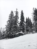 Winter landscape in the coniferous forest. Abandoned old wooden house, the Forester`s hut on a snowy meadow in the Carpathian mou. Ntains in Ukraine in the foggy Royalty Free Stock Images