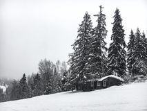 Winter landscape in the coniferous forest. Abandoned old wooden house, the Forester`s hut on a snowy meadow in the Carpathian mou. Ntains in Ukraine in the foggy Royalty Free Stock Image