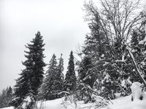 Winter landscape in the coniferous forest. Abandoned old wooden house, the Forester`s hut on a snowy meadow in the Carpathian mou. Ntains in Ukraine in the foggy Royalty Free Stock Photos