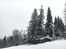 Winter landscape in the coniferous forest. Abandoned old wooden house, the Forester`s hut on a snowy meadow in the Carpathian mou. Ntains in Ukraine in the foggy Stock Photography