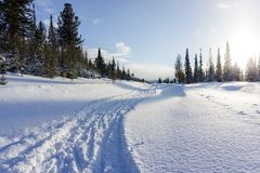 Winter landscape of coniferous forest with a snowy road leading to the village stock image