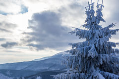 Winter landscape of coniferous tree and snowy mountain Royalty Free Stock Photos