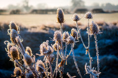 Winter landscape in the countryside Royalty Free Stock Photos