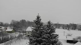 Winter landscape of the countryside, Ukraine. Smooth flight around fir trees with approach to them. Snowfall stock video footage