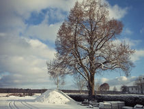 Winter landscape covered by snow and tree Stock Photo