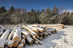 Winter landscape with cut logs under snow Royalty Free Stock Photos