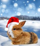 Little rabbit with santa cap. Winter landscape with a cute  little rabbit and snow Stock Image
