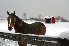 Winter landscape with dark bay horse waiting for a visitor in a snowy pasture Stock Photos