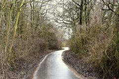 Winter landscape. Dark trees and fallen leaves on a wet path in the park lane after the rain. stock image