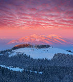 Winter landscape at dawn. Dawn in mountains. Winter landscape with snow covered forest Royalty Free Stock Image