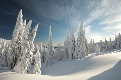 Winter landscape at dawn royalty free stock images