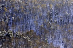 Winter landscape with a dense forest in a mountainous area Royalty Free Stock Photography