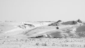 Winter landscape with dried plants, horse and rider. In the background Stock Photo