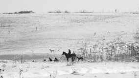 Winter landscape with dried plants, horse and rider. In the background Royalty Free Stock Photo