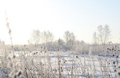 Winter Landscape Dry Grass Covered With Snow Royalty Free Stock Photos