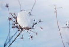 Winter landscape. Dry plants in snow in the winter. Stock Photo