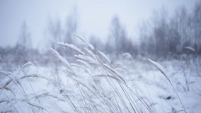 Winter landscape with dry plants on wind