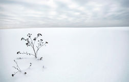 Winter landscape in dull day with a dry burr on foreground Royalty Free Stock Photo