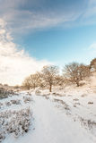 Winter landscape in Dutch national park Veluwe Stock Image