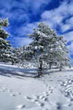 Winter landscape E Royalty Free Stock Photo