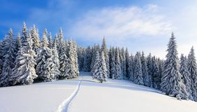 Winter landscape with fair trees under the snow. Scenery for the tourists. Christmas holidays. Trampled path in the snowdrifts stock images