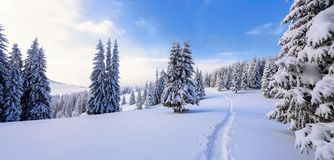 Winter landscape with fair trees under the snow. Scenery for the tourists. Christmas holidays. Trampled path in the snowdrifts Royalty Free Stock Photos