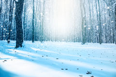 Winter landscape with falling snow Stock Image