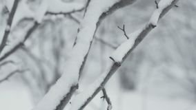 Winter landscape with falling snow. Detail of a tree twig. Everything is covered with fresh powder. Winter landscape with falling snow. Detail of tree twig stock video