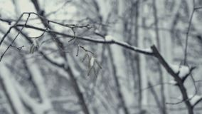 Winter landscape with falling snow. Detail of a tree twig. Everything is covered with fresh powder. Winter landscape with falling snow. Detail of tree twig stock footage