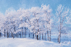Winter landscape with falling snowflakes- winter landscape of winter snowfall and sunlight over winter grove stock photo