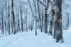 Winter landscape with falling snowflakes - wonderland park with snowfall. Snowy winter landscape scene. Winter snowy alley stock photo