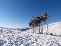 Winter. Landscape with a few wood and snow Stock Photography