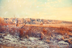 Winter landscape, a field with a dry grass and forest Stock Images