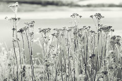 Winter landscape in field Royalty Free Stock Images