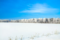 Winter landscape with a field snow and the blue sky Stock Images